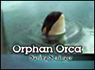 Orphan Orca: Saving Springer